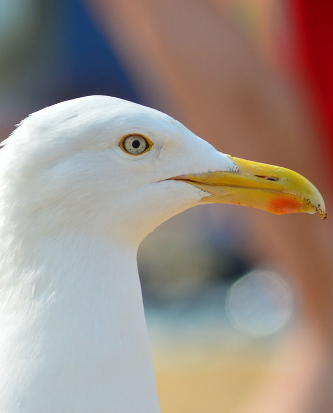 This rebellious looking seagull is here to introduce a novel in progress: The Seagull Rebellion, by Linda Jo Martin. This is the second book in the Antediluvian Adventures series.